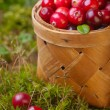 Stock Photo: Fresh cranberries in basket