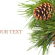 Stock Photo: Pine cone on branch