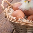 Hatched chicken in a basket with eggs — Stock Photo