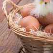 Hatched chicken in a basket with eggs - Stock Photo