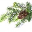 Spruce branch with cone — Stock Photo