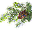 Spruce branch with cone - Stock Photo