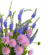 Summer bouquet of wildflowers — Stock Photo