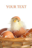 Hatched chicken and eggs — Stock Photo
