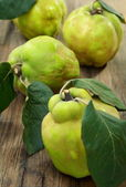 Ripe quince is on the table. — Stock Photo