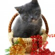 Stock Photo: Little kitten in a basket with Christmas toys.