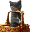 Little kitten in a basket with Christmas toys. — Stock Photo