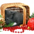 Stock Photo: Little kitten sleeping in a basket with Christmas toys.