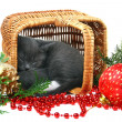 Little kitten sleeping in a basket with Christmas toys. — Stock Photo