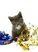 Little gray kitten in a gift box. — Stock Photo