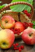 Sepet elma ve kartopu. — Stok fotoğraf
