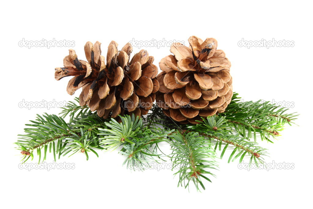 Two pine cones with branch on a white background. — Stock Photo #7926798