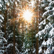 Foto Stock: Sunbeam through Winter Forest