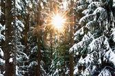 Sunbeam through the Winter Forest — Stock Photo