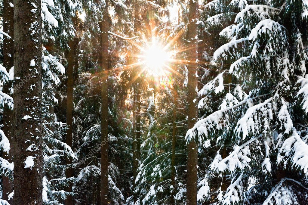 Detail view of a winter forest with sunbeam  Stock Photo #7550801