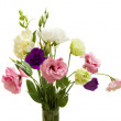 Eustoma flowers — Stock Photo