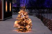 Christmas tree at night — Stock Photo
