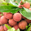Stock Photo: Lychee fruits
