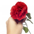Stock Photo: Rose in woman's hands