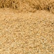Royalty-Free Stock Photo: Pile of paddy