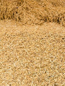 Pile of paddy — Stock Photo