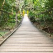 Rope walkway through the treetop — Stock Photo