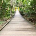 Rope walkway through the treetop — Stock Photo