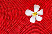 Flower on roll red rope — Stock Photo