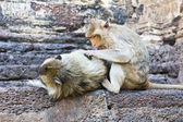 Familia de monos — Foto de Stock