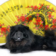 Chow-chow — Stock Photo #6817148