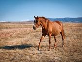 Brown horse — Stockfoto