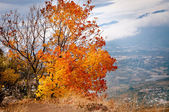 Orange herbst baum — Stockfoto