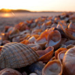 Stock Photo: Shell beach with Sunset