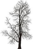 Chestnut tree — Stock Vector