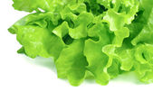 Fresh lettuce isolated on white background — Stock Photo