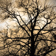 Stock Photo: Sepiabstract branches silhouette