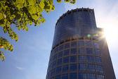 Skyscraper, baranch and sun. — Stock Photo