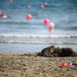 Toys on the beach — Stock Photo