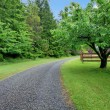 Stock Photo: Apple garden and gravel road