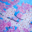 Cherry blossom. Painting. ART. — Stock Photo