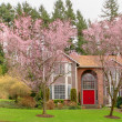 Stock Photo: Americlarge house with cherry blossom in spring.