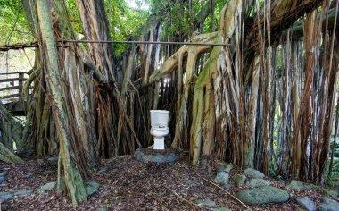 Toilet in the jungle. Maui. Hawaii. Eco house.