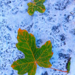 WInter snow covered ground with two green maple leafs. — Stock Photo