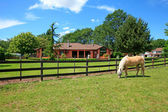 Horse farm with horses, house and summer beautiful day. — Stock Photo