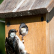 Birdhouse Breakfast — Stock Photo
