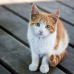 Pretty Kitty — Stock Photo #6987470