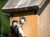 Birdhouse Breakfast — Stock Photo