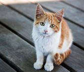 Pretty Kitty — Stock Photo