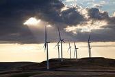 Větrný mlýn pole — Stock fotografie