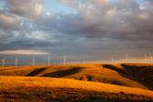 Windmill Farm — Stock Photo